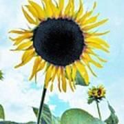 Sunflower Fields Forever One Art Print