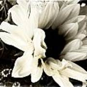 Sunflower In Black And White 3 Print by Tanya Jacobson-Smith