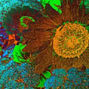 Sunflower In Brown Art Print