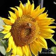 Sunflower-jp2437 Art Print