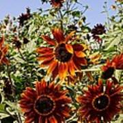 Sunflower Layers Art Print