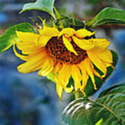 Sunflower Magic I Art Print