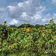 Sunflower Maze Art Print