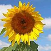 Sunflower Nirvana 30 Art Print