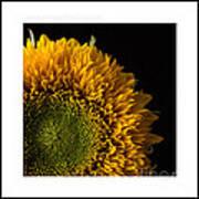 Sunflower Original Signed Mini Art Print