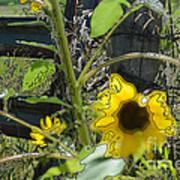 Sunflower Outline 4 Art Print