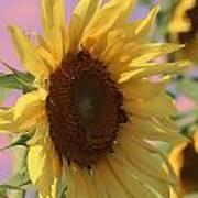 Sunflower Pop Art Print