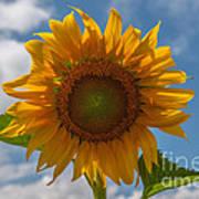 Sunflower Power Art Print