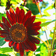 Sunflower - Red Blazer - Luther Fine  Art Art Print