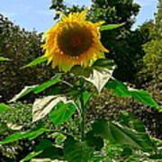Sunflower Sally Art Print