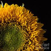 Sunflower Square Art Print