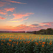 Sunflower Sunset Art Print by Bill Wakeley