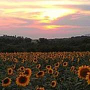 Sunflower Sunset Art Print by Dawn Vagts