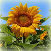Sunflower Sunshine Art Print