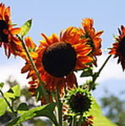 Sunflower Symphony Print by Karen Wiles