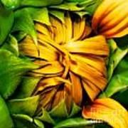 Sunflower Volunteer Art Print