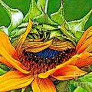 Sunflower Volunteer Half Bloom Art Print