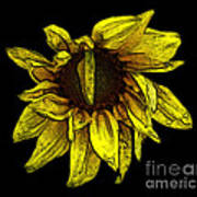 Sunflower With Contours Effect Art Print