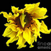 Sunflower With Curlicues Effect Art Print