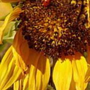 Sunflower With Ladybug Art Print