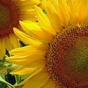 Sunflowers #1 Art Print