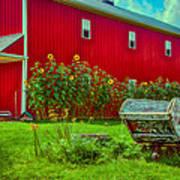 Sunflowers Beside A Big Red Barn Art Print