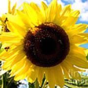 Sunflowers Feeding The Hive Art Print