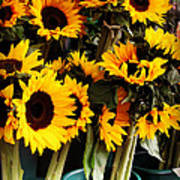 Sunflowers In Blue Bowls Art Print