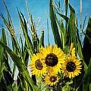 Sunflowers In The Corn Field Art Print
