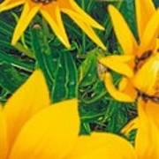 Sunflowers Medley Art Print