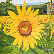 Sunflowers - Red Barn - Pennsylvania Art Print