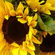 Sunflowers Wide Art Print