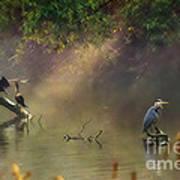 Sunglow Heron Art Print