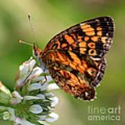 Sunlight Through Butterfly Wings Art Print