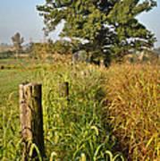 Sunlit Fence Posts In Weeds Art Print