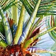 Sunlit Palm Fronds Art Print