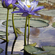 Sunlit Purple Lilies  Art Print