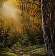 Sunlit Trail Art Print