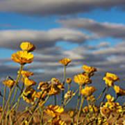 Sunlit Yellow Wildflowers Art Print