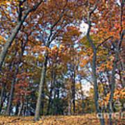 Sunny Autumn Day 3 Art Print