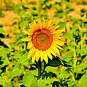 Sunny Art Print by BandC  Photography