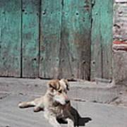 Dog Enjoying A Sunny Doorstep Art Print