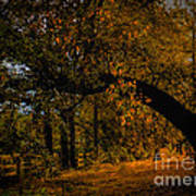Sunny Fall Afternoon Art Print