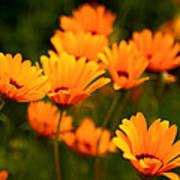 Sunny Floral Art Print