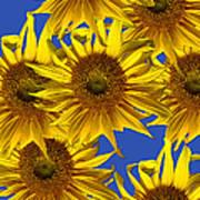 Sunny Gets Blue Art Print