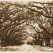 Sunny Southern Day With Old World Framing Art Print