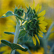 Sunny With Texture Print by Rima Biswas