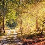 Sunray In The Autumn Forest Art Print