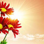 Sunrays Flowers Art Print