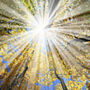 Sunrays In The Forest Art Print